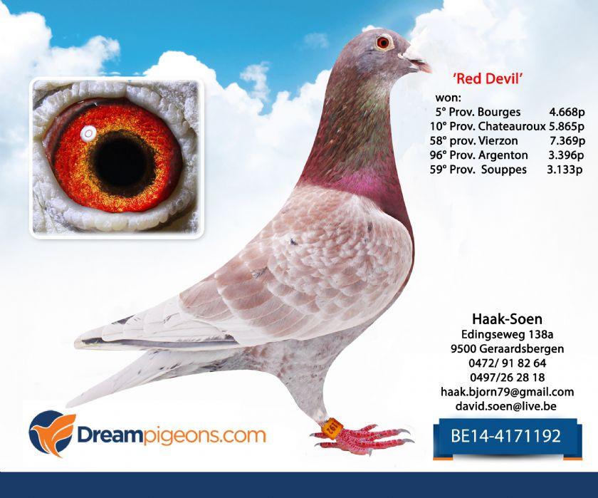BE14-4171192 Cock Top Pigeon