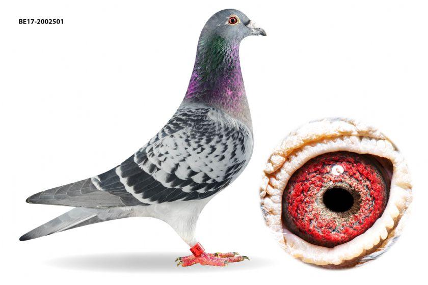 BE17-2002501 Cock 2 x 1.Prizewinner