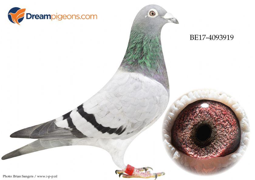 BE17-4093919 Hen Hebberecht x Meirlain
