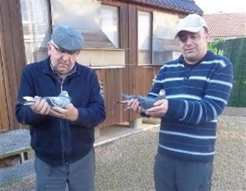 Gielkens-Carmans 2 jonge duif 2020 op afspraak