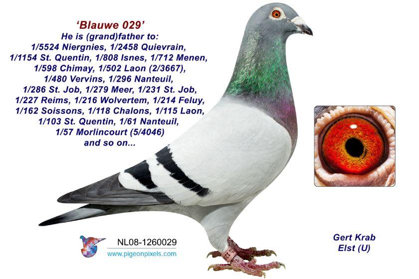 Extra info (1) NL19-1476472 Halfsister 11x 1st