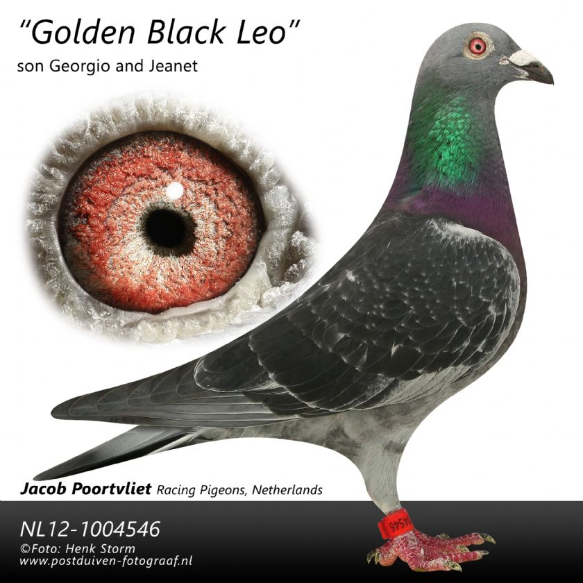 Extra info (1) NL19-1184662 HEN BLOODLINE OLYMPIC MAGICIAN X KITTEL