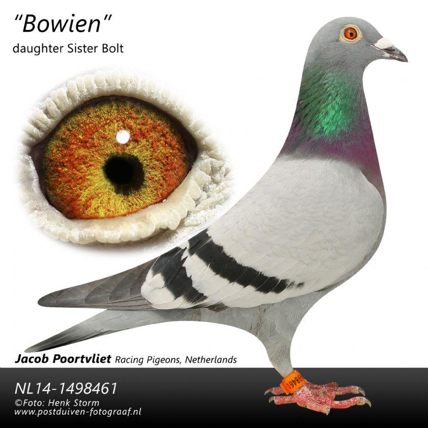 Extra info (1) NL19-1184681 HEN BLOODLINE SUPER 481 KAASBOER JOZEF GOOVAERTS