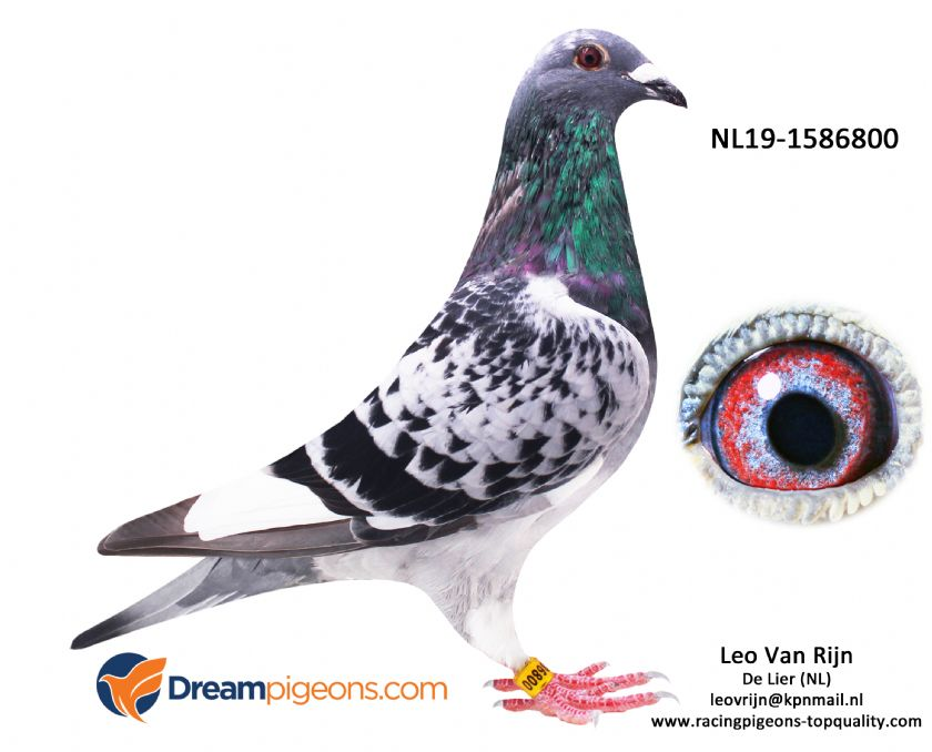 NL19-1586800 Son Frederica 4 X 1