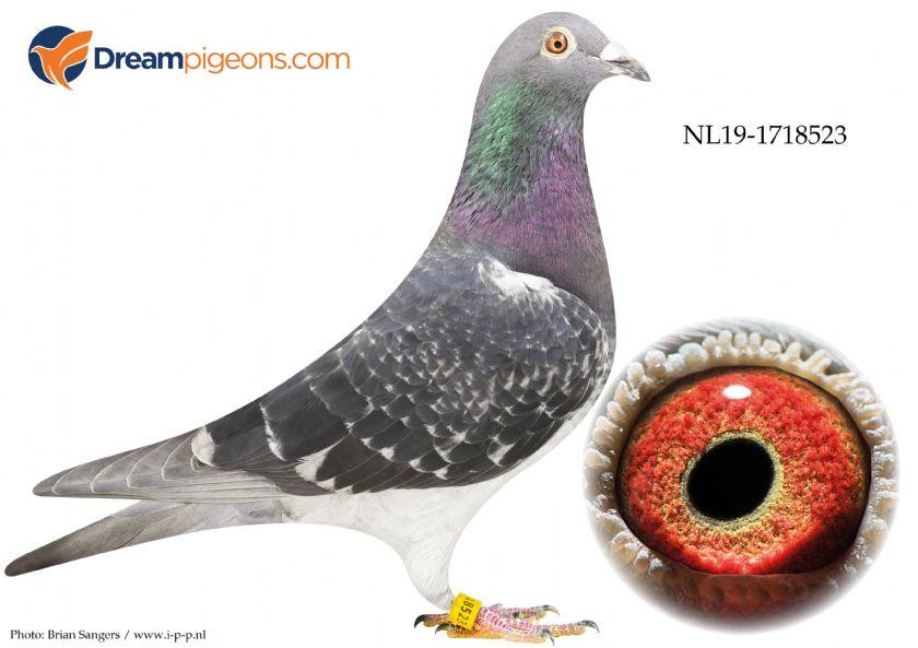 NL19-1718523 Daughter 33 Nat Agen
