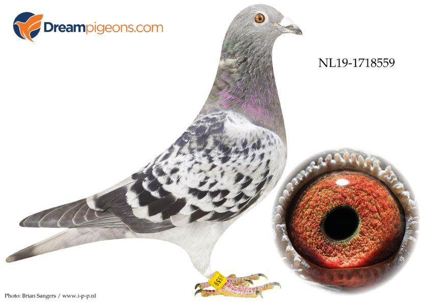 NL19-1718559 Grandson 1 Int Nat Agen