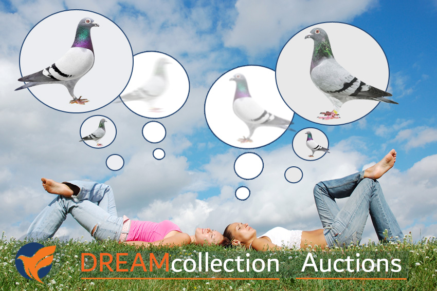 Dreampigeons introduceert Dreamcollection.